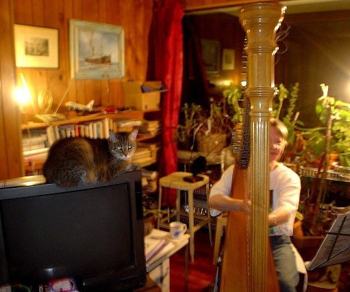 Playing the harp with cat